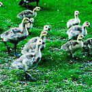 Streams of Ducklings by kalikristine