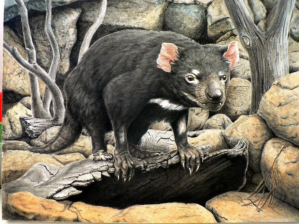 Tasmanian Devil (Sarcophilus harrisii ) by Elizabeth Russell-Arnot