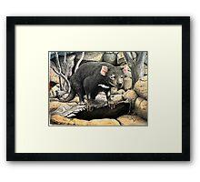 Tasmanian Devil (Sarcophilus harrisii ) Framed Print