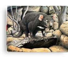 Tasmanian Devil (Sarcophilus harrisii ) Canvas Print