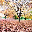 Autumn 2012 by bkphoto