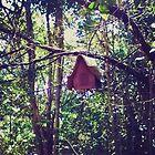 Hidden Birdhouse by kalikristine