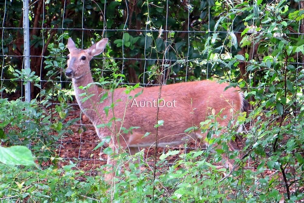 Doe, a Deer... by AuntDot