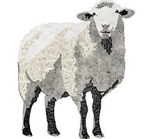Sheep by Laudea Martin