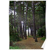 Forrest Walk Poster
