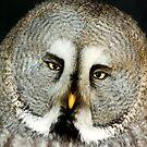 Great Grey Owl by Kawka