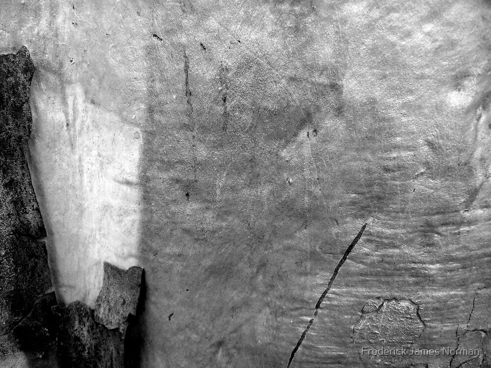 Black & White Abstract Bark by Frederick James Norman