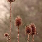 Thistle Heads in Autumn by rubyrainbow