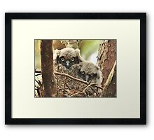Baby Great Horned Owlets Framed Print