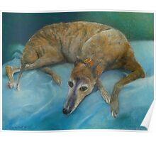 Brindle Greyhound Poster
