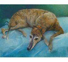 Brindle Greyhound Photographic Print
