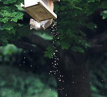 The Reason I Spend So Much On Birdseed . . . by Renee Blake