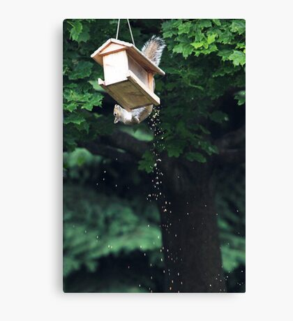 The Reason I Spend So Much On Birdseed . . . Canvas Print