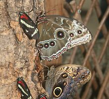 Butterfly exhibit at Detroit Zoo by bng9306