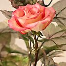 Real Rose And Not So Real Leaves by Sandra Foster