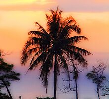 tropical by motiashkar