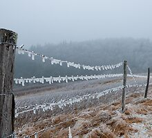 Blue Ridge Parkway Ice by RayDevlin