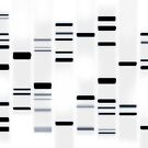 DNA Art Black on White by ArtPrints