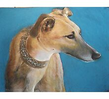 Tan Greyhound Photographic Print