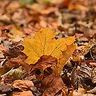 Autumn Leaf by Martina Fagan