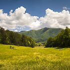 Cades Cove Great Smoky Mountains National Park - Gold and Blue by Dave Allen