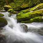 Roaring Fork Great Smoky Mountains National Park Cascade - Gatlinburg TN by Dave Allen