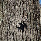 Oak Shadow by Christopher Barker