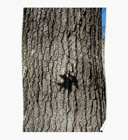 Oak Shadow Poster