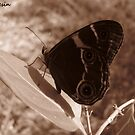 Butterfly in Sepia by MissResin