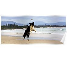 Dogs  Day at the Bay  Poster