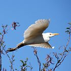 Spread YOur Wings And Fly by Graeme M