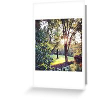 color woods Greeting Card