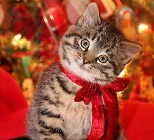 Christmas Kitten by gillcrow