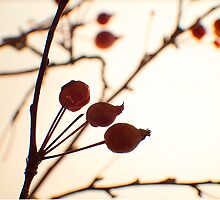 Berries 1 -Fall Foliage Series by welanderphoto