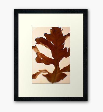 Oak Leaf -Fall Foliage Series Framed Print