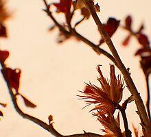 Spikey Pink -Fall Foliage Series by welanderphoto