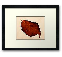 Red Leaf -Fall Foliage Series Framed Print