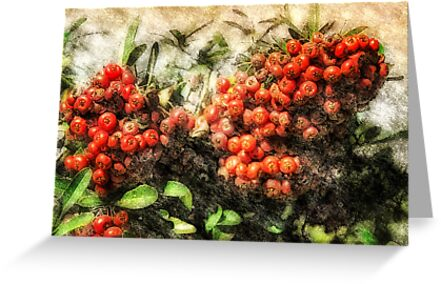 Holiday Berries by pat gamwell
