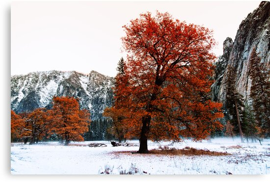 Early Winter by Vince Russell