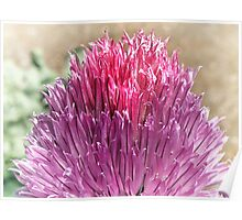 Chives flower Poster