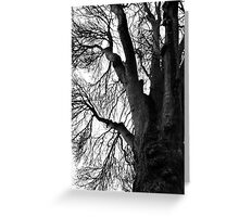 Woods Photograph Greeting Card