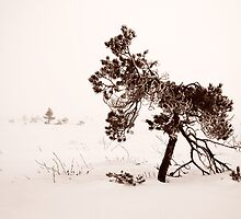 29.12.2012: My Roots in This Cold Ground by Petri Volanen