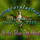Image of the Week Banner (Nikon Fun Group) by TJ Baccari Photography