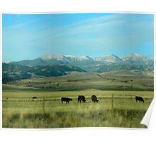 Beautiful Montana Poster
