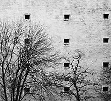 Windows by Anne Staub