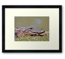 The Lazy Gator & The Dragonfly Framed Print