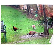 pheasants pheasants every where Poster