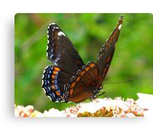 Fluttering butterfly wings Canvas Print