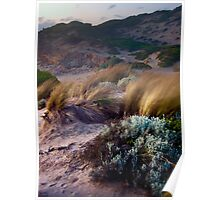 Early Evening on the Dunes Poster