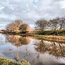 Skippool Creek. by Lilian Marshall